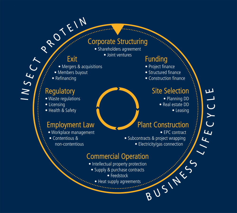 Insect protein business lifecycle