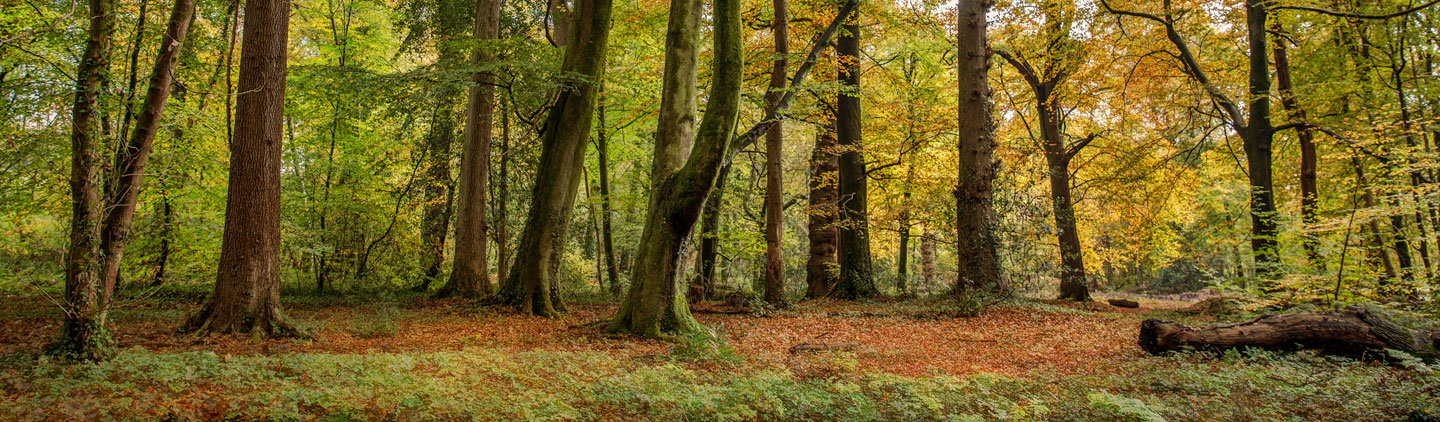 Agricultural Law | Woodland Ownership