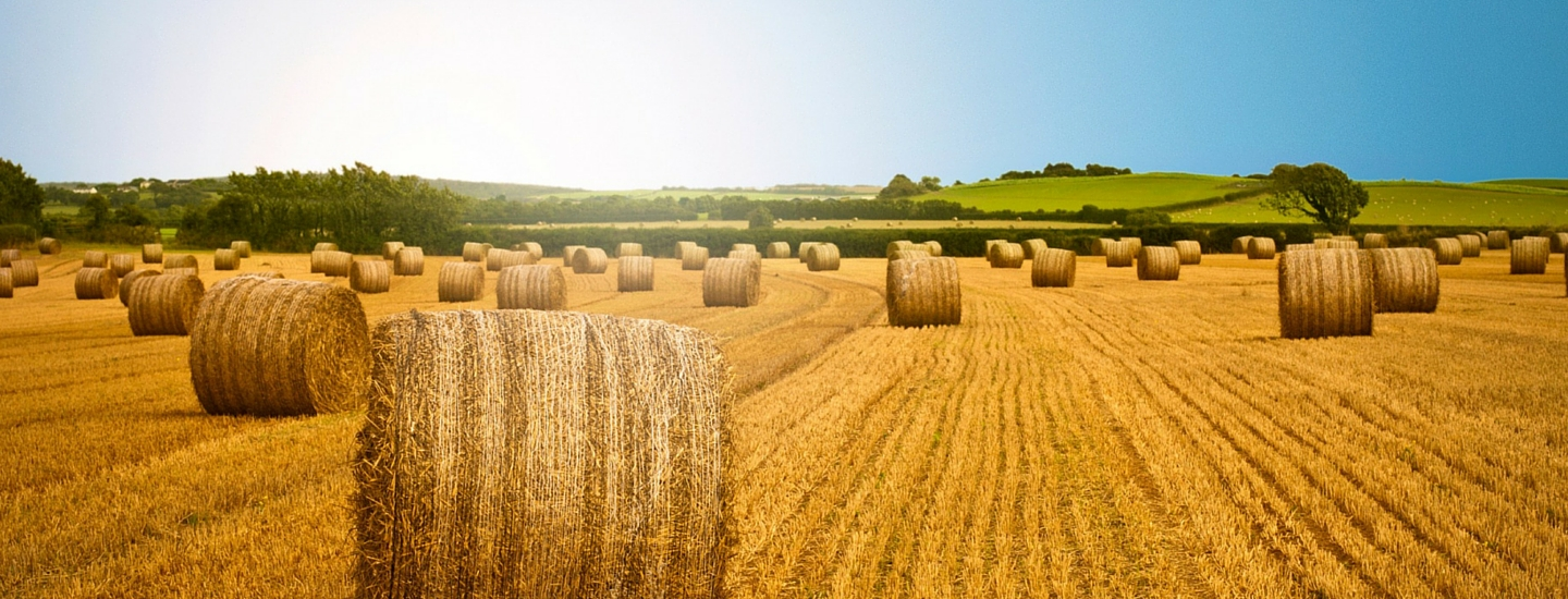 Western Daily Press Food and Farming awards | Agriculture