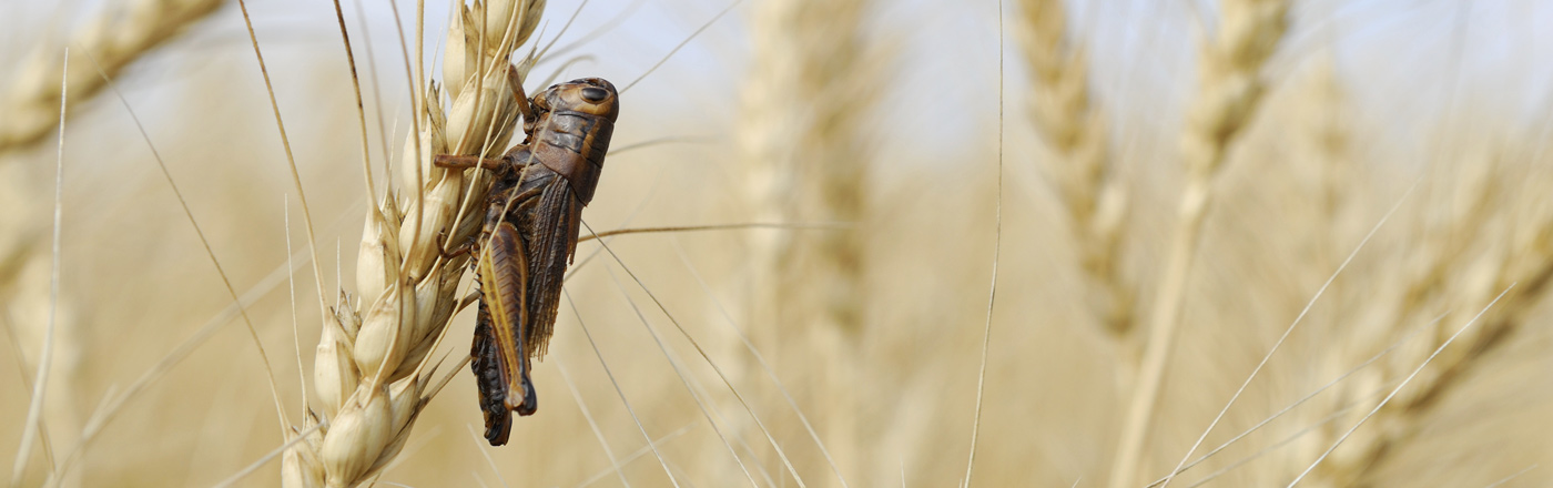 Insect Farming - Agricultural Solicitors