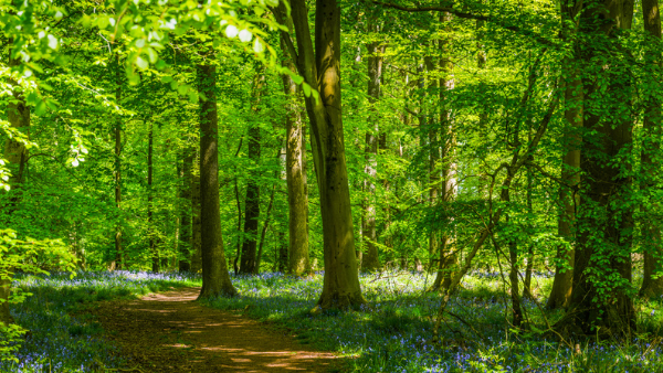 How will considerations around natural capital impact the landlord and tenant relationship?