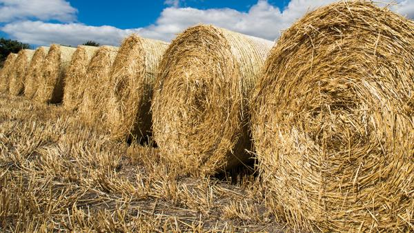Agricultural news - Agriculture law