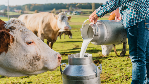 Michelmores advises Freshways Dairy on merger with Medina Dairy