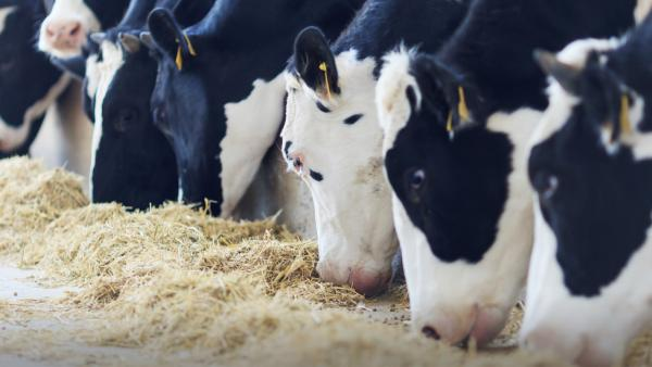 Agricultural Solicitors | Agriculture News