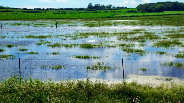 Environment Agency   Flooding   Agricultural Law