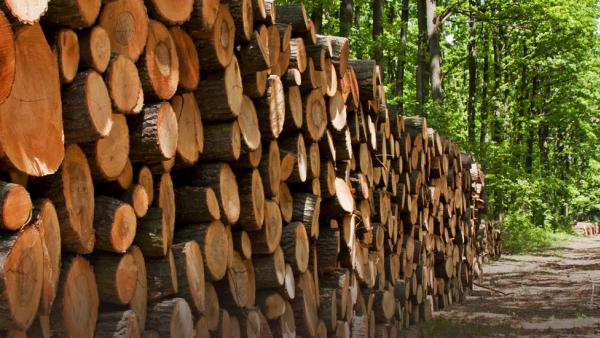 EU Timber Regulation Solicitors