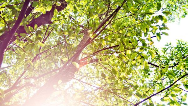 Trees and encroachment | Property Litigation | encroachment law