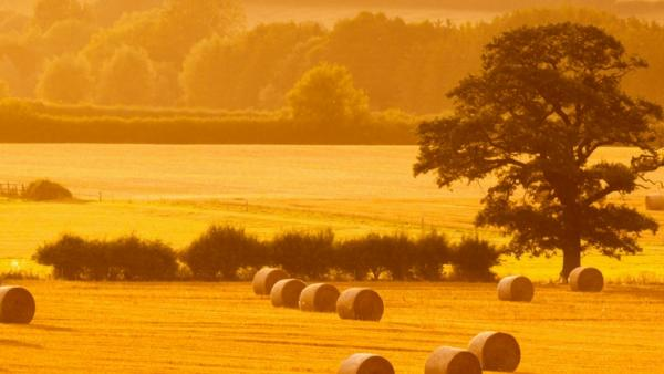 Agricultural Lore - Autumn Edition | Agricultural Law