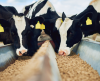 Michelmores provides legal guidance to the UK's first report on the future of feed: a WWF roadmap to accelerating insect protein in animal feed