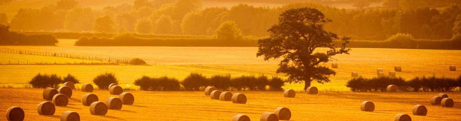 Agricultural Lore - Autumn Edition   Agricultural Law